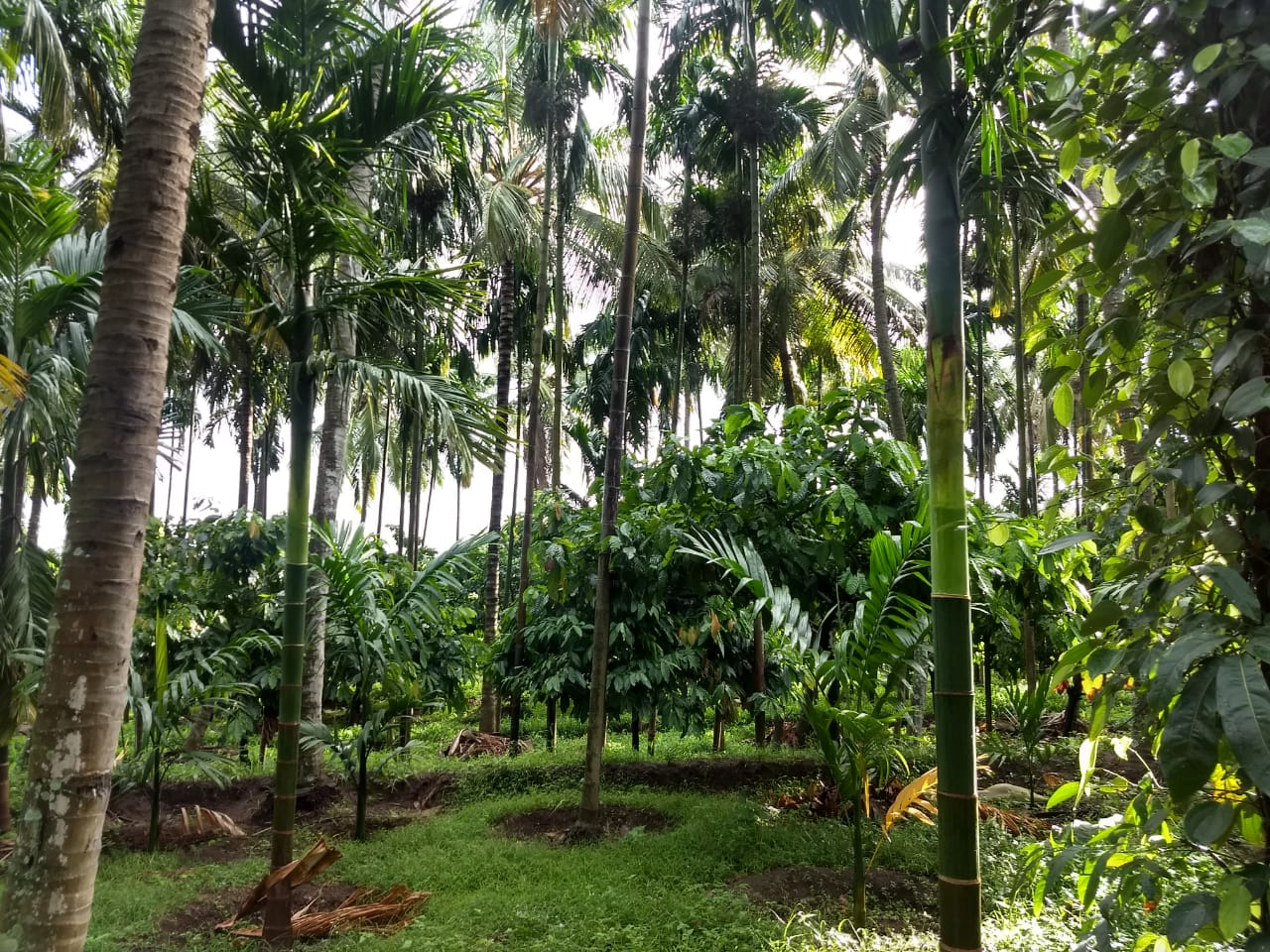 18 Acre cheapest agricultural land for sale in