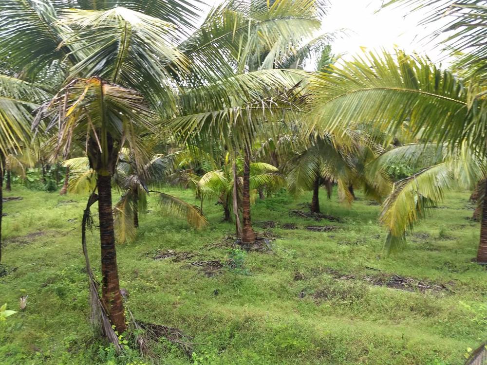 5 acre low budget farm land for sale Kozhinjampara, Palakkad - Best Realtors
