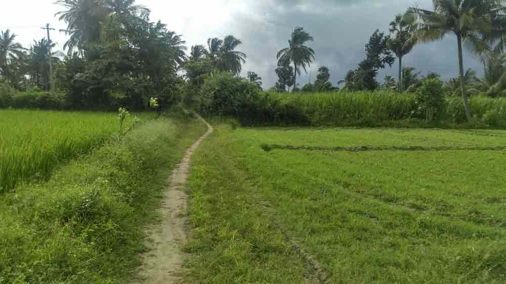Agricultural Land for sale in Palakkad - SHAS-000554