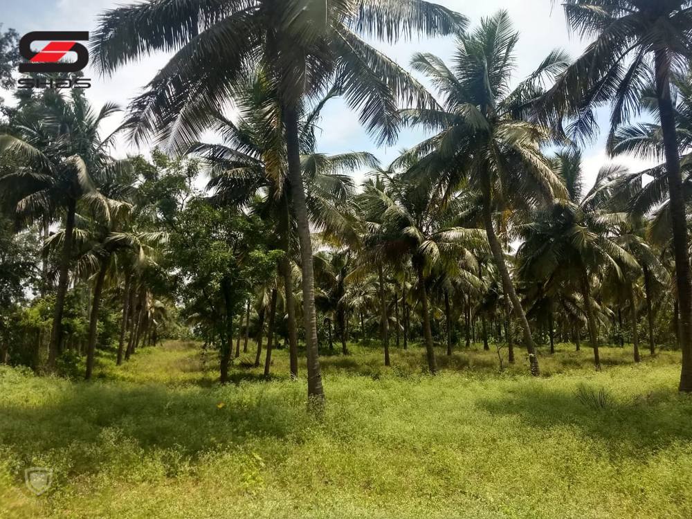 Shas Online - Buy or sell agricultural land or plot Palakkad, Kerala