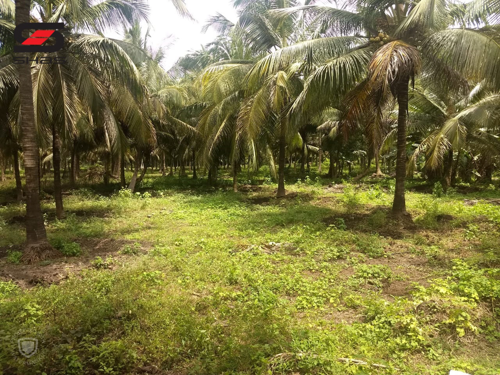 Agricultural land for sale Palakkad - Find farmland property