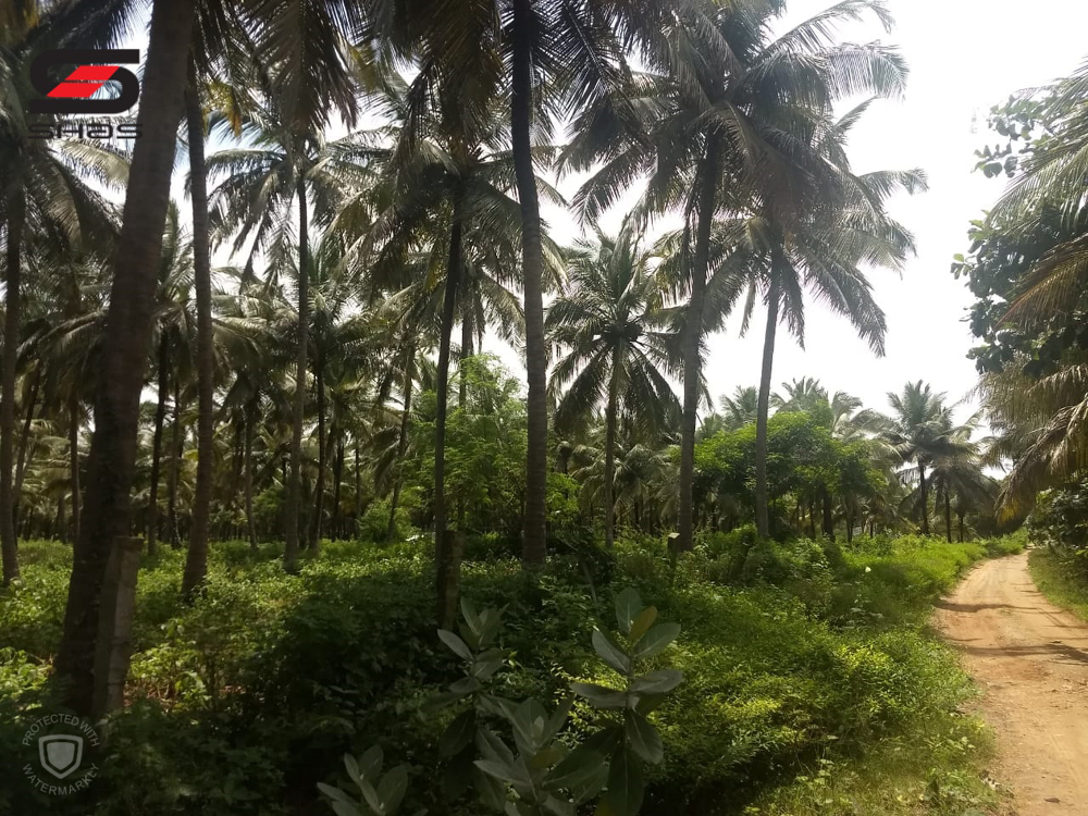 Buy agricultural land for sale Palakkad, Kerala - Real estate property