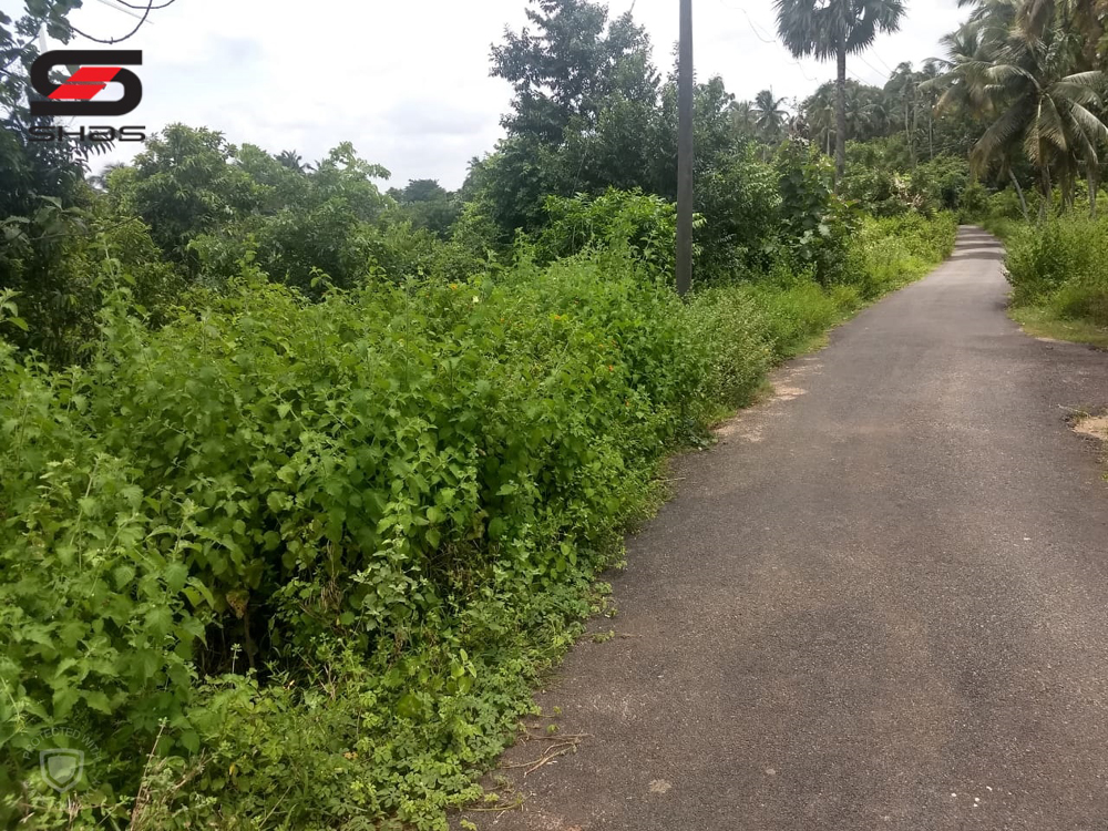 Agricultural land on budget for sale Palakkad - Property In Kerala