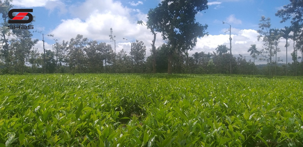Tea estate for sale in Sulthan Bathery, Wayanad - Shas Properties