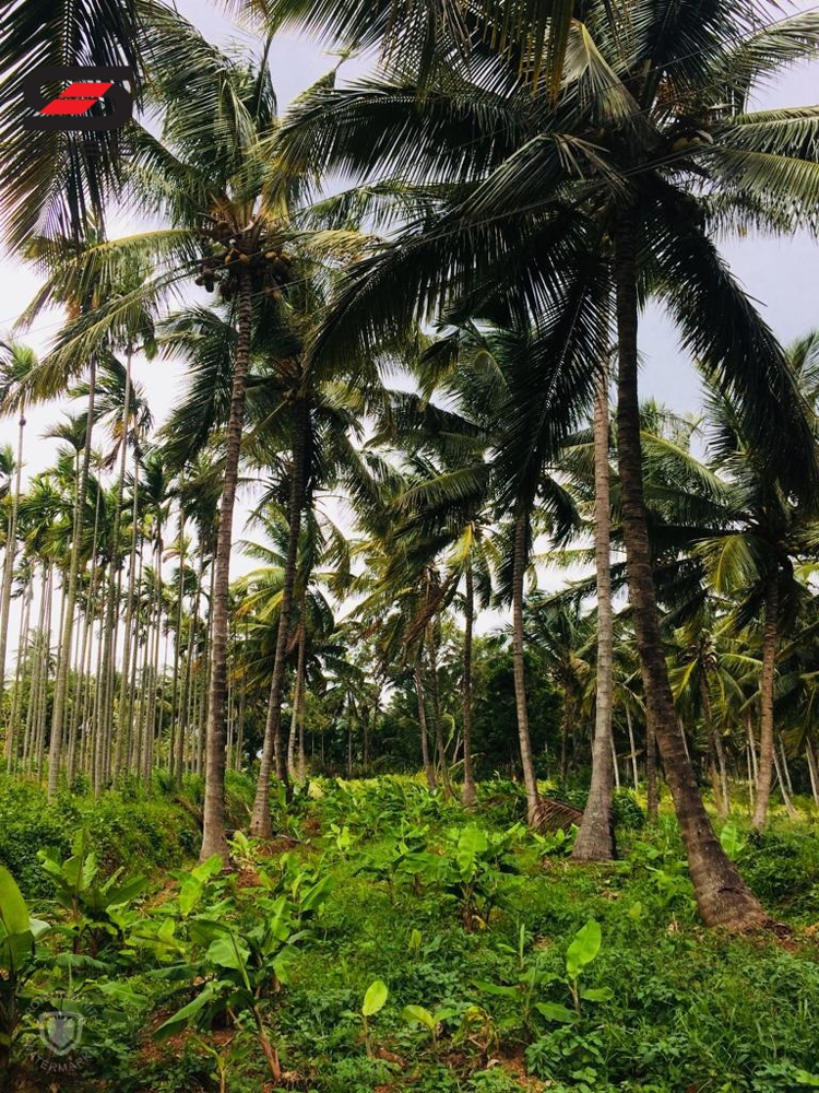 Farmland for sale Attapadi, Palakkad Real Estate Agents Online