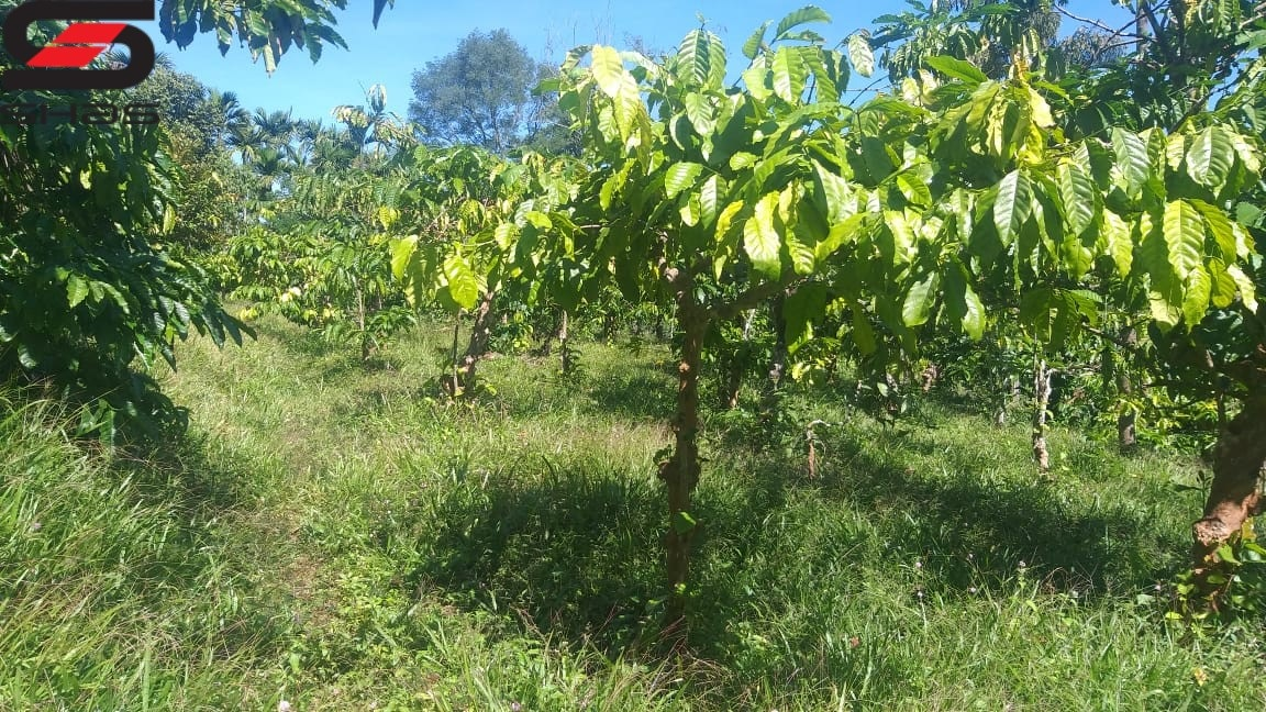 Coffee plantation for sale in Wayanad, Sulthan Bathery