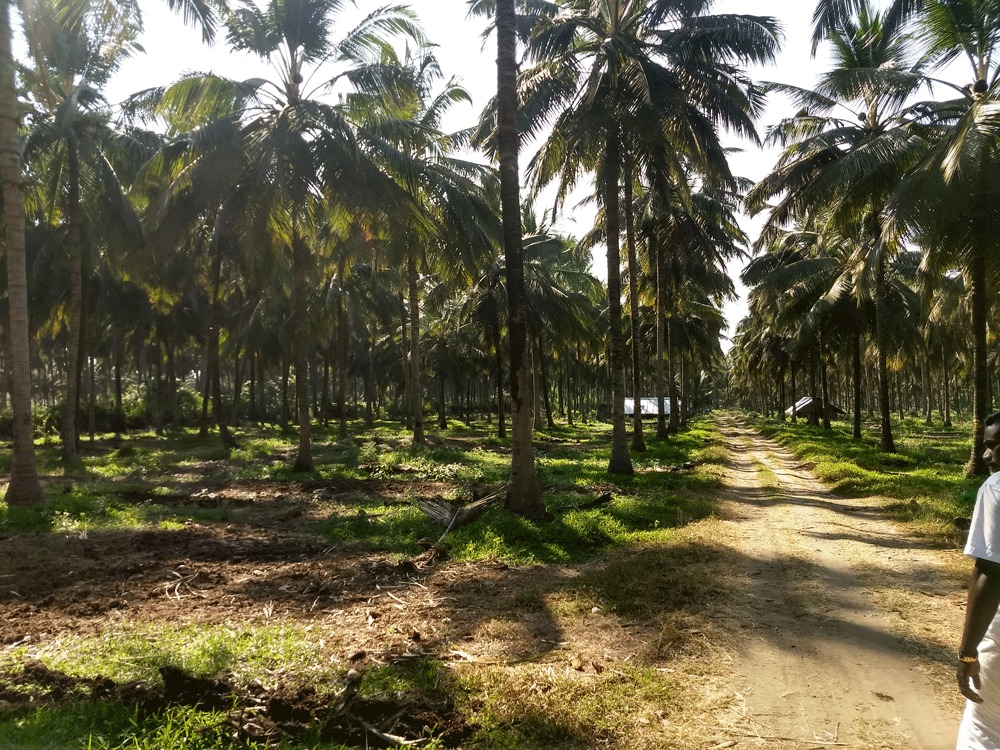 Property Sale in Palakkad