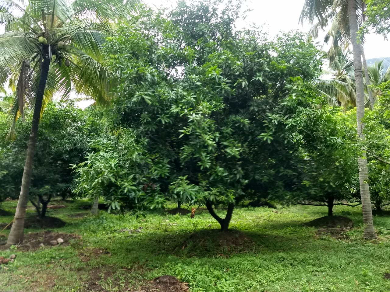 Cheap 13 Acre Mixed Farm Land With Farm House For Sale In
