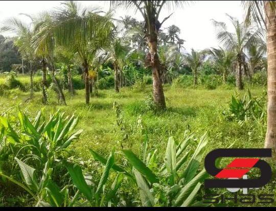Farmland for sale, Palakkad Properties, Kerala Real Estate Agents