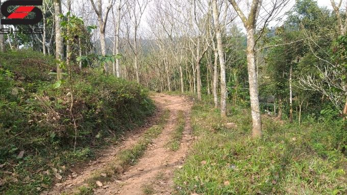 Land for sale in Kenichira, Wayanad, Properties Kerala