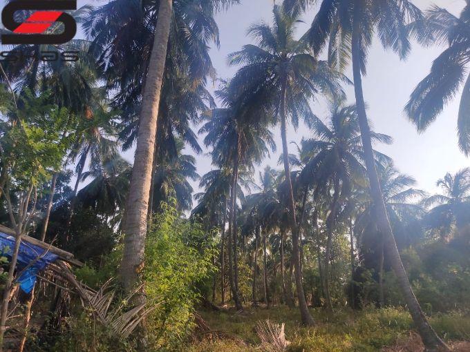 Farmland for sale in Palakkad, Shas Properties Realtors Kerala