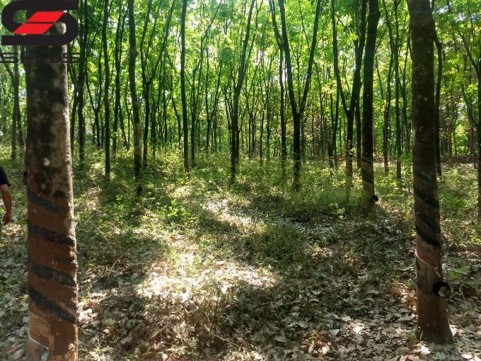 Rubber estate for sale in Vadakkencherry, Palakkad Real Estate Agents