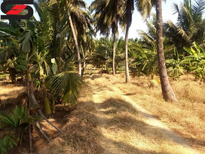 Farmland with house for sale on budget, Palakkad Properties