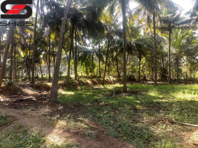 Agricultural land for sale in Palakkad Real Estate, Shasonline