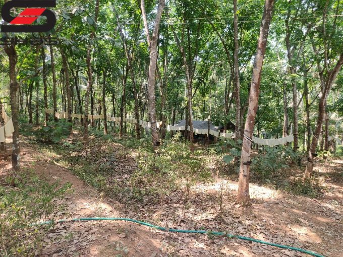 Farmland with 2 BHK house for sale in Palakkad, Kerala Properties