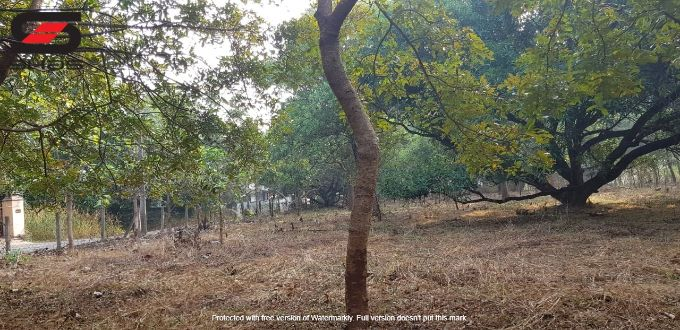 Residential land for sale in Akathethara, Palakkad Properties, Realtors