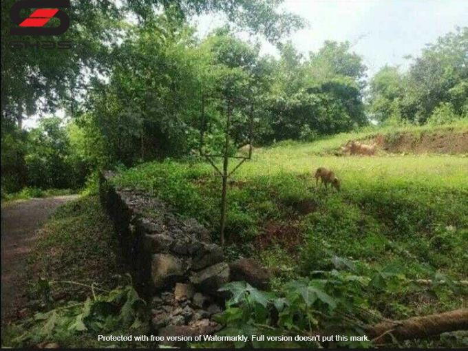 Residential plot for sale in Ottapalam, Palakkad Properties, Shasonline