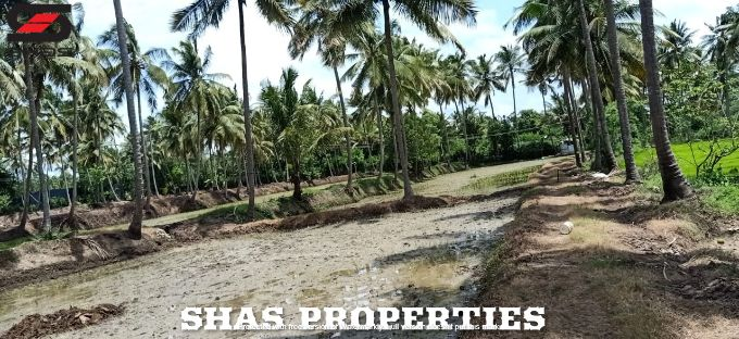 Farmland in Palakkad for sale, Shas Properties Kerala Real Estate