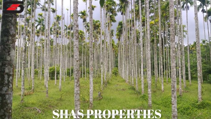 Agricultural land in Panamaram, Wayanad for sale, Kerala Properties