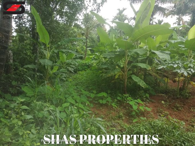Agricultural land for sale in Thumboor, Thrissur Real Estate
