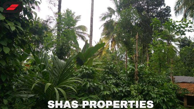 Agricultural land in Wayanad, Kenichira for sale, Kerala Realtors