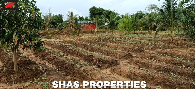 Farmland for sale in Alathur, Palakkad Real Estate Properties
