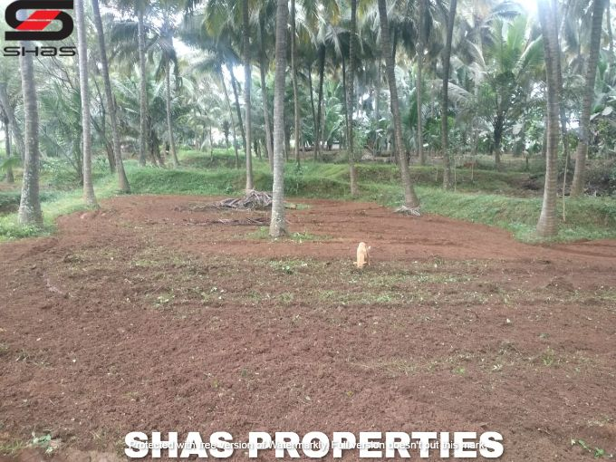 Farmland in Kozhinjampara, Palakkad for sale, Real Estate
