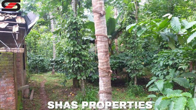 Agricultural land in Kenichira, Wayanad for sale, Kerala Realtors